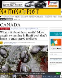 What Is Is About Those Snails More Caught Swimming In Banff Pool That S Home To Endangered